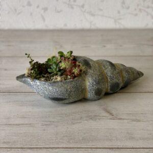 Succulents Mix Seashell